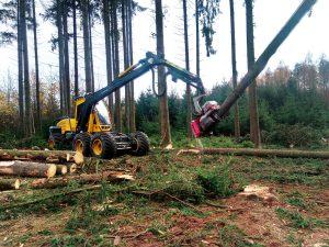 Starkholzernte mit dem stärksten Rad-Harvester Deutschlands